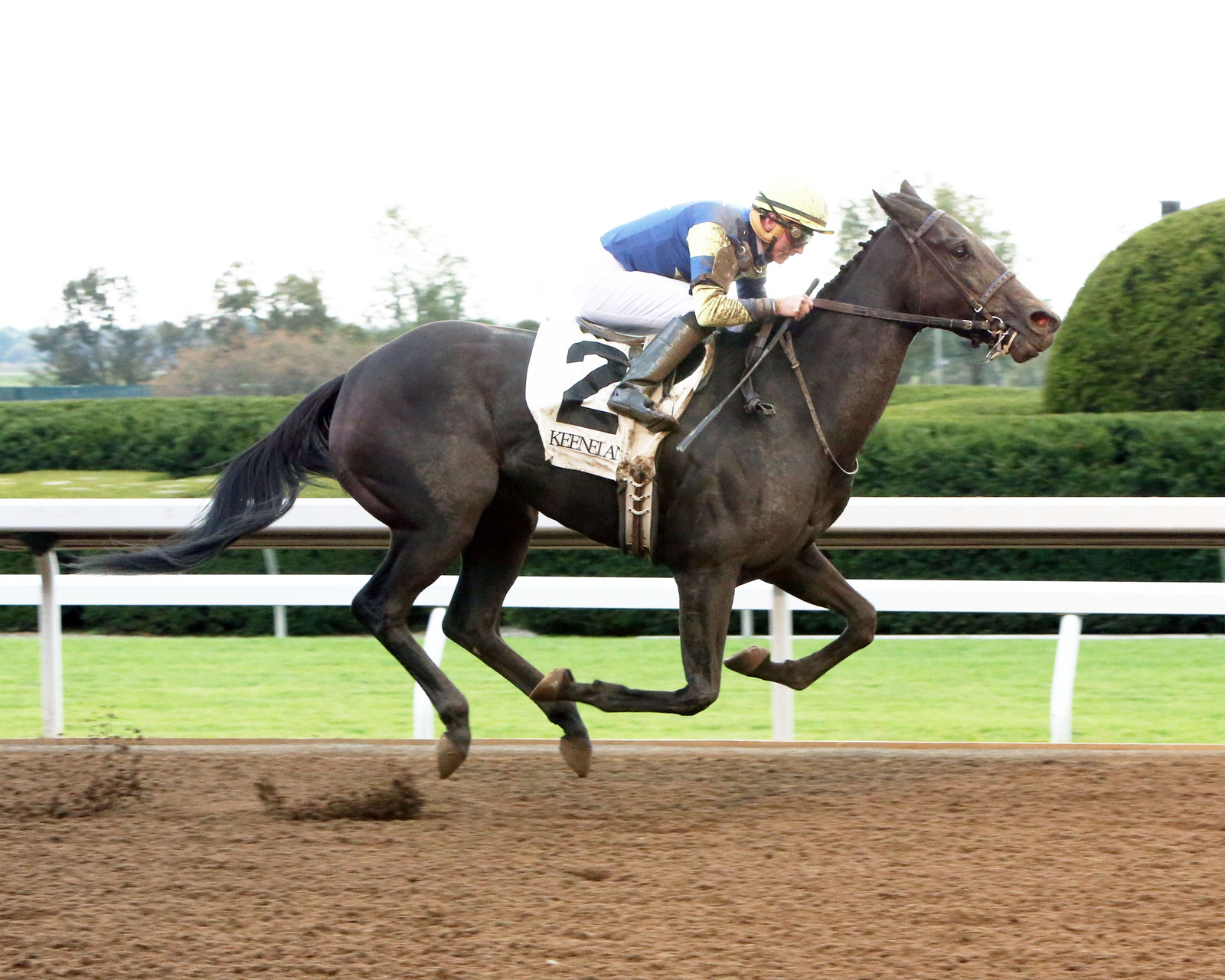Leigh Court - 2014 TCA Stake-Race Winner